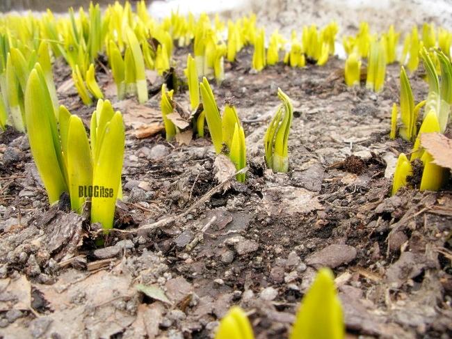 spring is here! Helsinki 13.4.2011 by BLOGitse