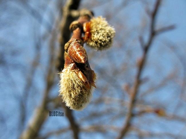 spring 2012 by BLOGitse