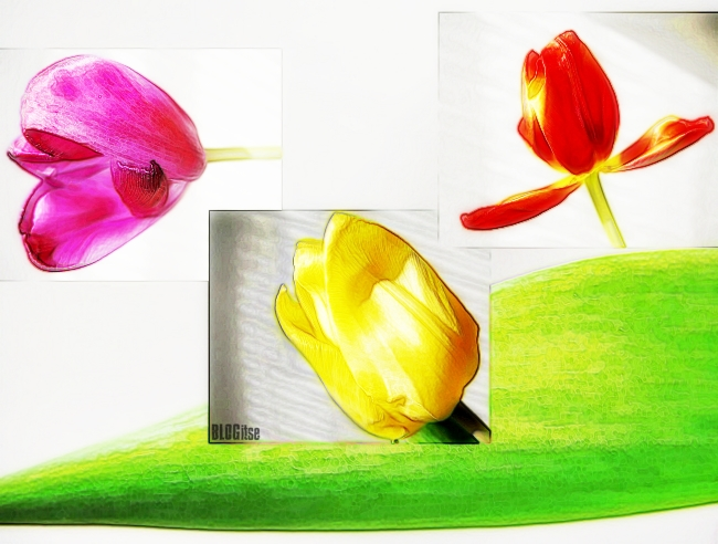 tulip canvas by BLOGitse