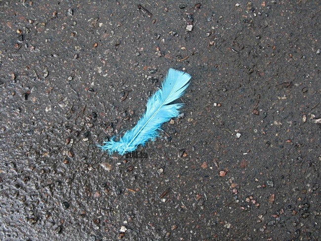 blue feather pic by BLOGitse