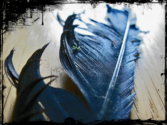crow's feather by BLOGitse