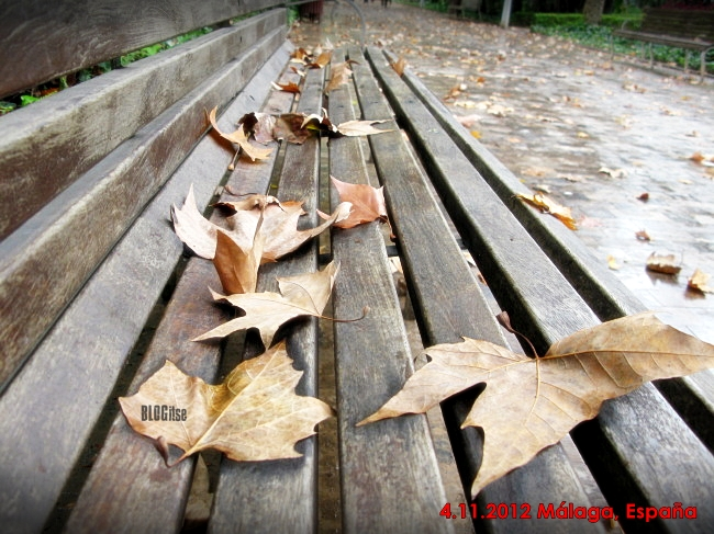 autumn in Malaga  Spain 4.11.2012 by BLOGitse