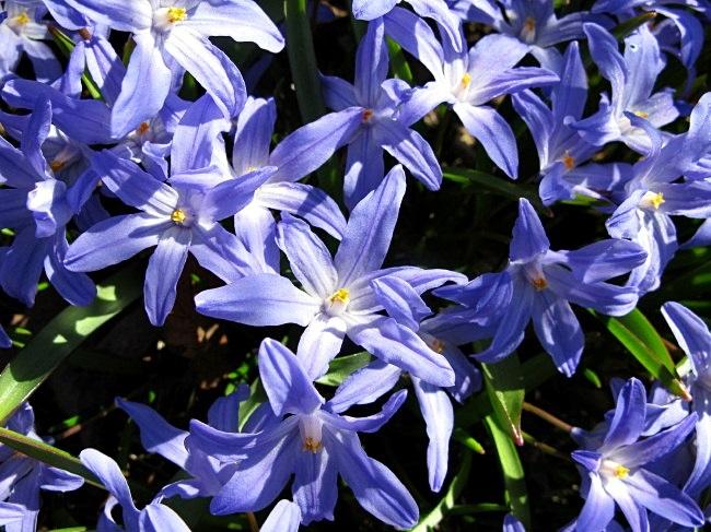 spring flower power bu BLOGitse