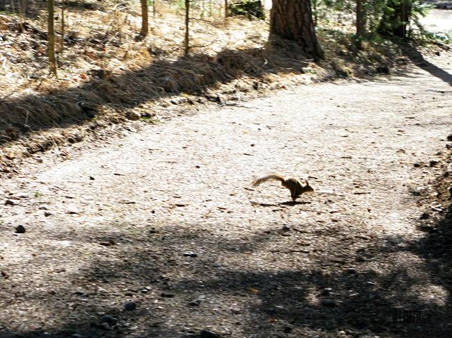 squirrel by BLOGitse