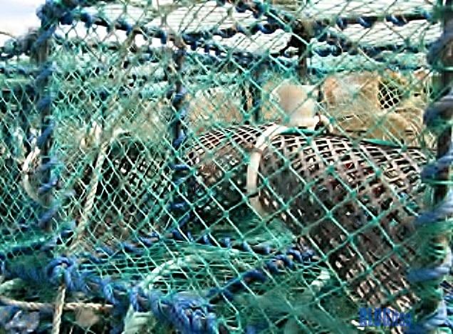 lobster trap_2 by BLOGitse