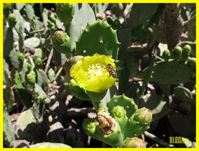 yellow cactus flower by BLOGitse