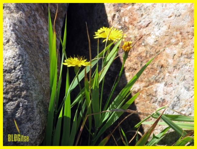yellow flowers by BLOGitse