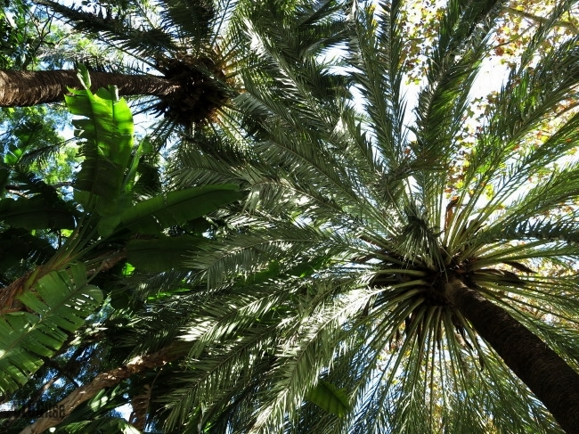 sunny Malaga 1.12.13 by B