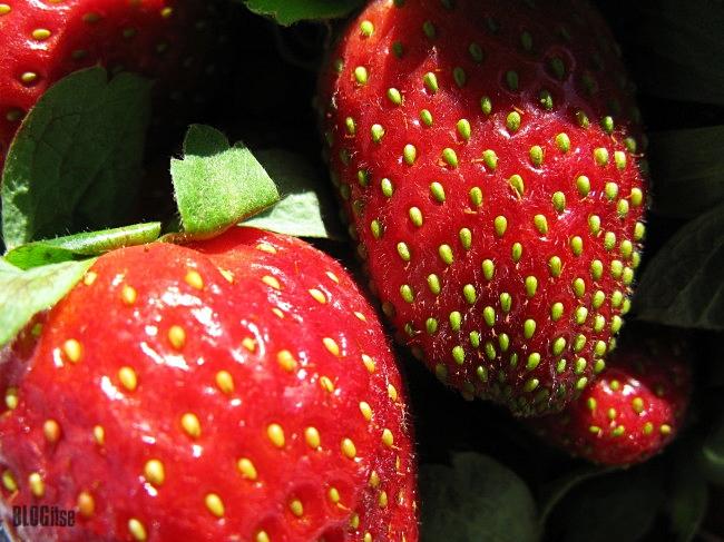 Malaga Spain strawberries December 2014 by BLOGitse