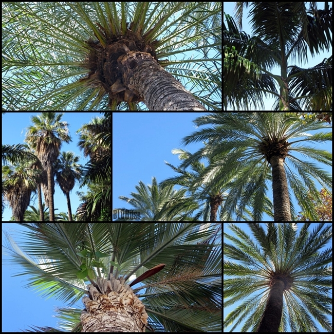 palm trees in Malaga Spain by BLOGitse