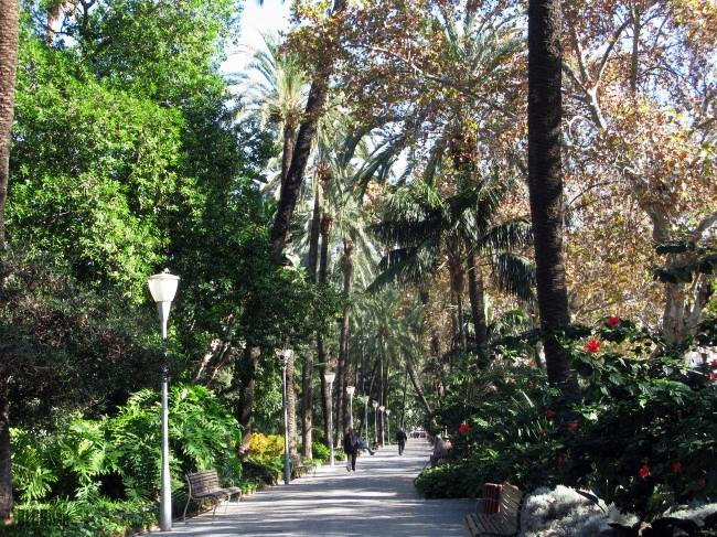 trees in Malaga Spain by BLOGitse