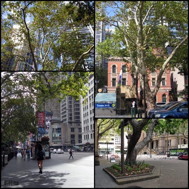 Sydney city center by BLOGitse