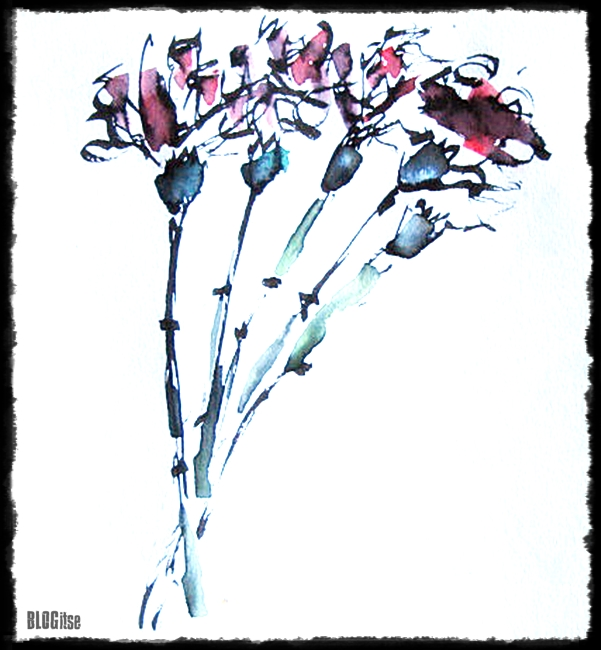 Dianthus Caryophyllus, neilikka, watercolor painted by BLOGitse