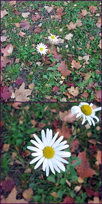flower in the autumn by BLOGitse
