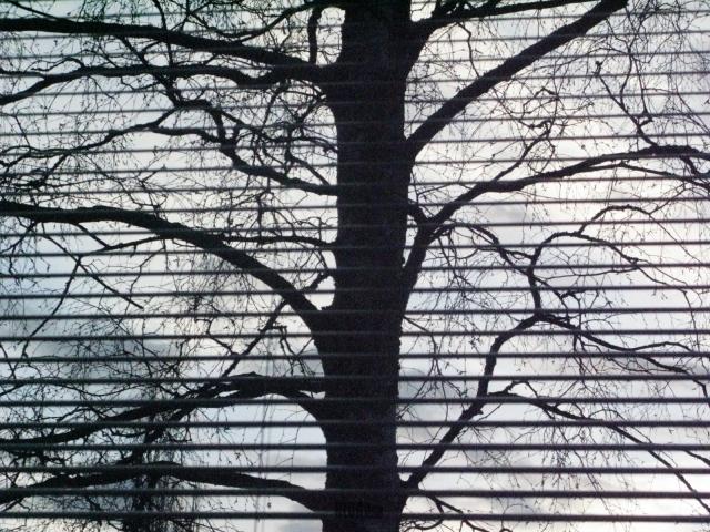 a tree by BLOGitse