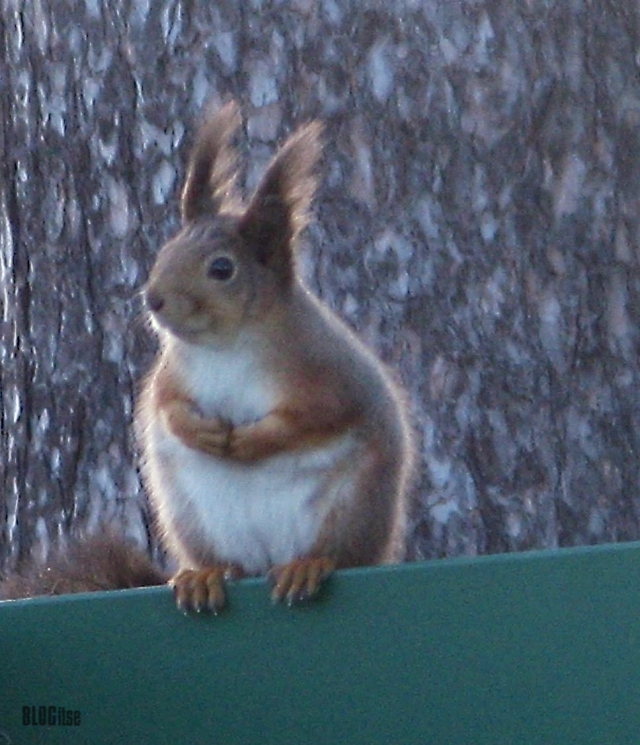 sitting squirrel by BLOGitse